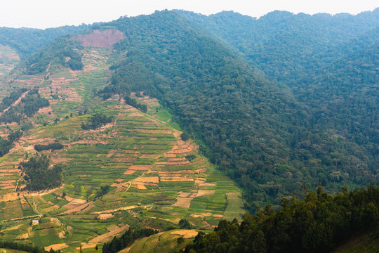 Deforestation at the frontier to Bwindi Nationalpark in Uganda