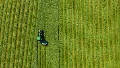 Harvesting hay in summer. Combine harvester of an agricultural machine collects ripe grass on the field. View from above.  Wall mural