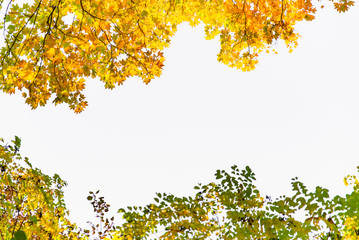 view of tree branch with yellow leaves autumn fall season