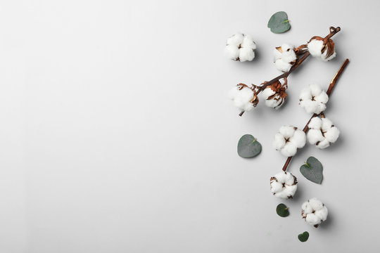 Flat lay composition with cotton flowers on light grey background. Space for text