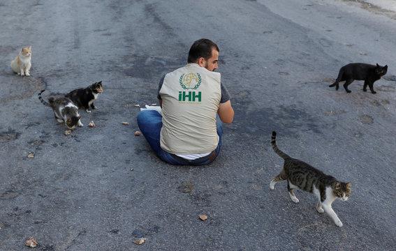 Ahmad Ody Alstouf feeds street cats in Kafr Nabl