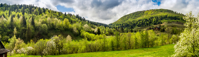 panorama of the Carpathian mountains