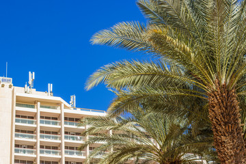 Middle East summer vacation destination for rest picture of palm tree foreground on Arabic hotel and vivid blue sky background