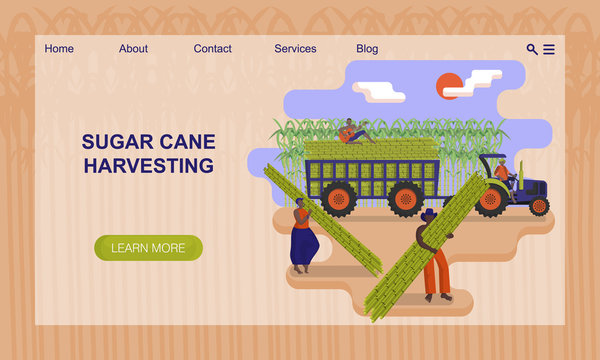 Black agricultural workers are picking a sugarcane in the field. Concept of website, landing page design template