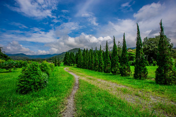 The blurry nature background of pine trees, which grow on the edge of the green fields, surrounded by mountains, clear skies, blurred winds, cool weather during an adventurous journey.