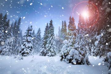 Majestic winter landscape with snowy fir trees.  Winter postcard.