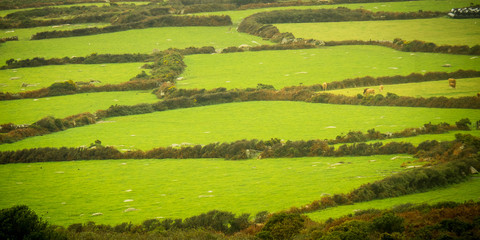 Pattern of green fields and Hedgerows in Cornwall, England