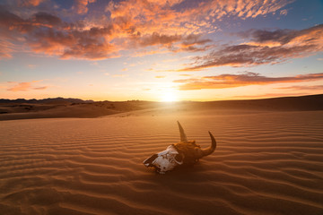 Skull bull in the sand desert at sunset. The concept of death and end of life