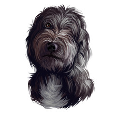 Portrait of lagotto romagnolo puppy dog digital art illustration. Water pet of Italian origin, region of Romagna. Pet with long fur and kind eyes. Gun hunting mammal animal domesticated by people.