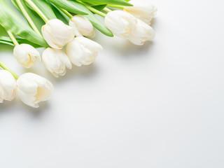 White tender tulips on white background.