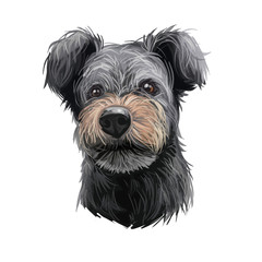 Pumi dog portrait isolated on white. Digital art illustration of hand drawn dog for web, t-shirt print and puppy food cover design. Pumik breed of sheep dog from Hungary, Hungarian herding terrier.
