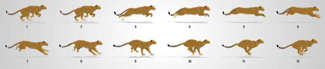 Cheetah run cycle animation sequence