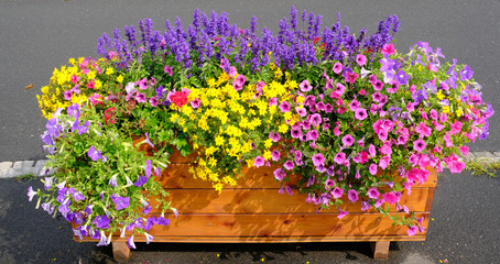 Colourful flowers in a wooden box