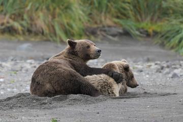 Mutterliebe und Fürsorge - Bärenmutter mit Jungem