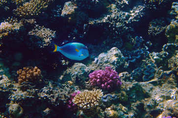 Deurstickers Onder water Colorful coral reef with exotic fishes of the Red Sea. Egypt.
