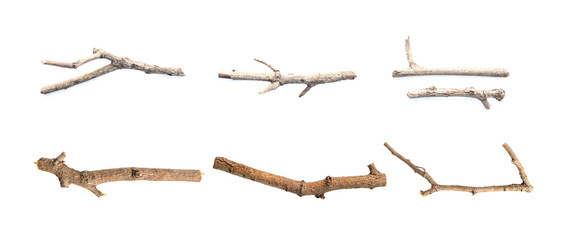 Set of tree branch isolated on white background.