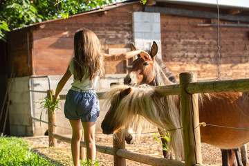 Cute little girl feeds donkeys in a farm