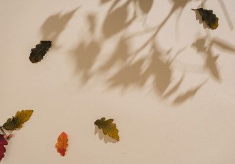 Autumn or fall scene background with leaves and shadows. Minimal nature seasonal conccept. Flat lay composition.
