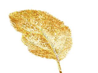 Ilustración de una hoja de otoño dorada y aislada sobre fondo blanco.