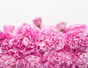 Fototapete - beautiful pink peony flower background