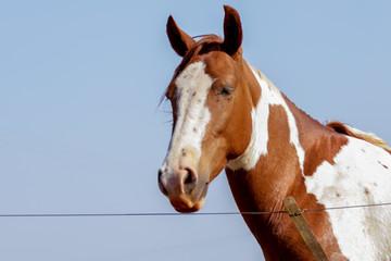 cavalo horse