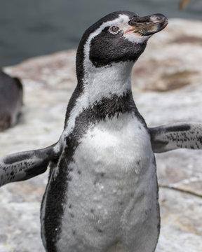 penguin in zoo