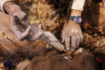 The Wider Image: The race to save the coral of the Caribbean
