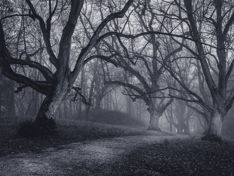 Spooky dark forest scene with dark and creepy looking trees lining a dark path at a winters night.