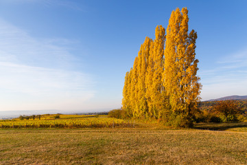 Herbst im Rheingau.