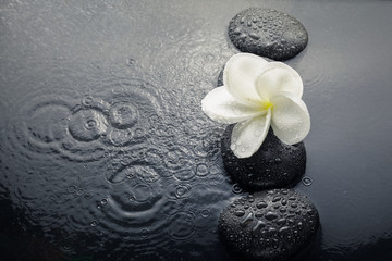 shiny zen stones with water drops and plumeria flower. Top view