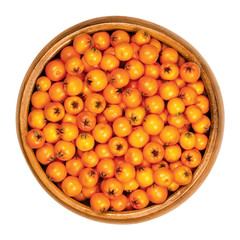Firethorn fruits in wooden bowl. Fresh and ripe orange colored seeds of Pyracantha. The fruit can be made into jelly. Bird food. Closeup, from above, on white background, isolated macro food photo.