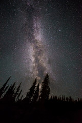 Low angle view of silhouette forest against Milky Way at night, BC