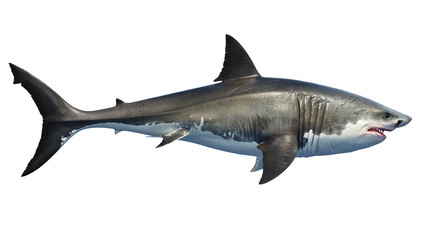 White shark marine predator big, side view. 3D rendering