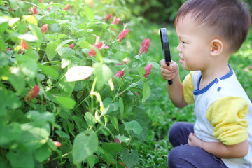 Cute curious little Asian 2 - 3 years old toddler boy kid exploring environment by looking through a magnifying glass in sunny day at beautiful garden, Kid first experience & discovery concept