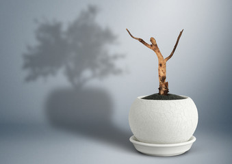 Dead tree in pot with life tree shadow, loss concept