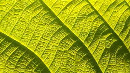Background patterned green leaves close-up Wall mural