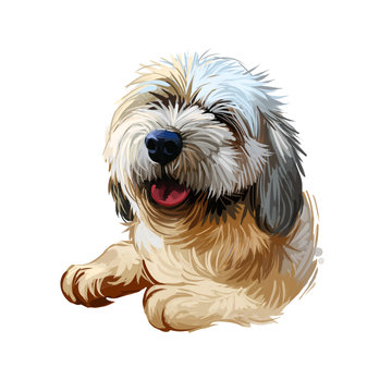 Lhasa apso puppy Tibetan long-haired purebred digital art. Poster with text and watercolor portrait of dog, domestic animal with long fur. Mammal showing tongue, friendly muzzle of pet doggy purebred.