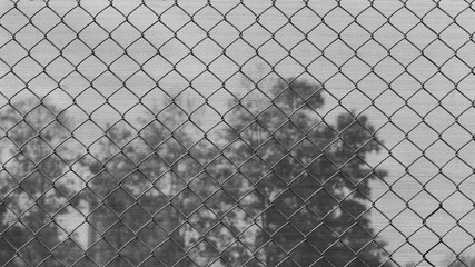 Chain link fence in front of big tree in a jail.