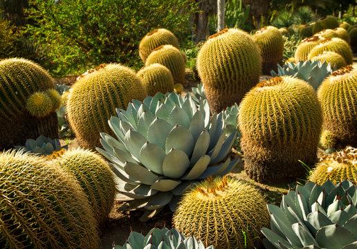 Fantastic desert garden in the bright sun in the summer.