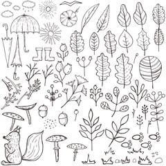 Autumn elements set, floral hand draw designs. Botanic vector stock illustration, EPS 10.