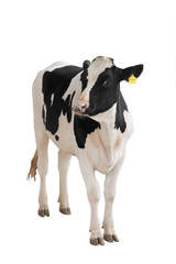 Poster de jardin Vache black - white cow isolated on a white background.