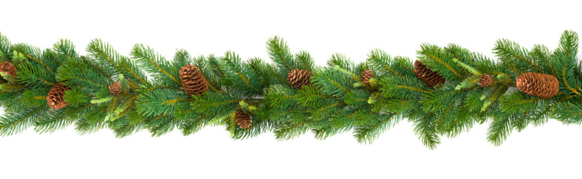 Garland with green fir branches and cones isolated on white