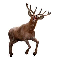 Printed roller blinds Deer 3D Rendering Male Deer on White