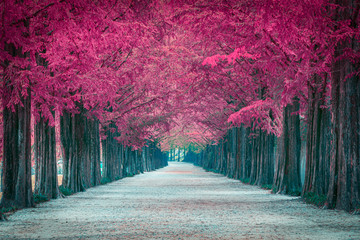 Printed kitchen splashbacks Crimson Pink tree tunnel in in South Korea