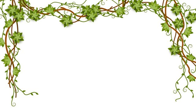 Tropical jungle lianas branches decorative banner vector illustration isolated.