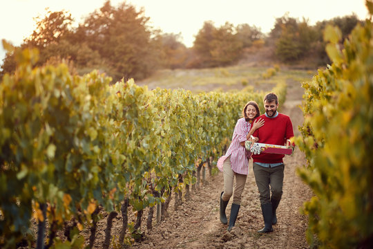 Autumn vineyards. Wine and grapes. Couple winemakers walking in between rows of vines.