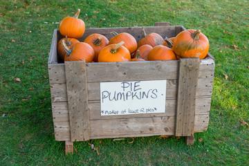 A wooden bin full of farm pie pumpkins.