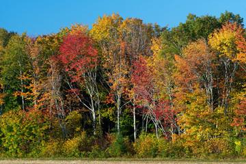 Colorful treeline along a farm field in rural Prince Edward Island, Canada.