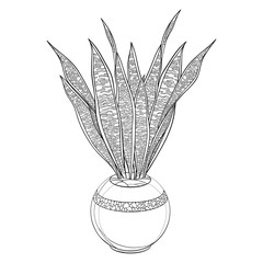 Outline Sansevieria trifasciata or snake plant or mother-in-law's tongue leaves bunch in flowerpot in black isolated on white background.