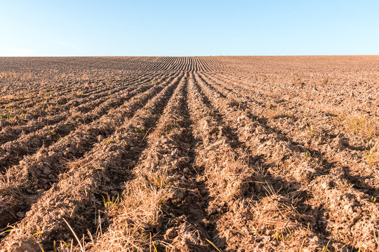 Furrows on the field after harvesting. Empty plain without a single plant. Agriculture landscape in autumn